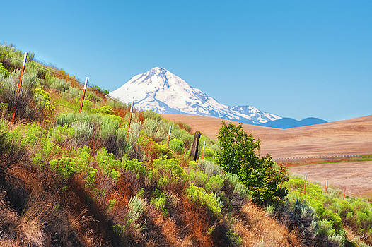Mt. Hood and Sagebrush by Dee Browning