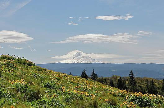 Mt. Hood and Wild Flowers by Emilia Brasier