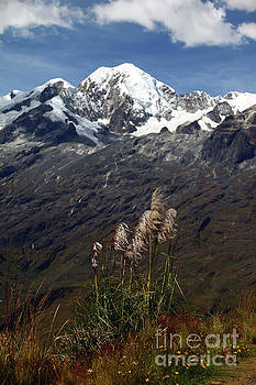 James Brunker - Mt Illampu and pampas grass Bolivia