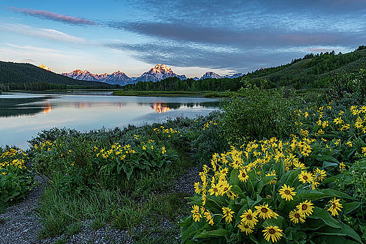 Tibor Vari - Mt. Moran Sunrise with Wildflowers