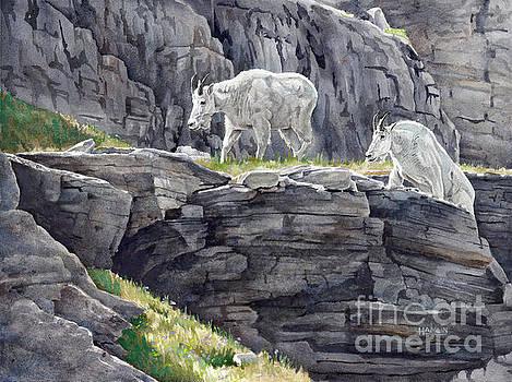 Mt Oberlin Mountain Goats by Steve Hamlin