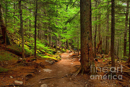 Adam Jewell - Mt Rainier Forest Path