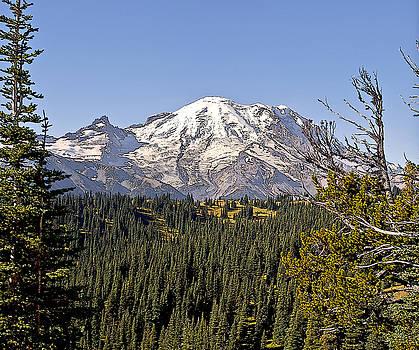Mt Rainier from Sunrise by Larry Darnell