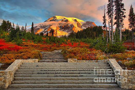 Adam Jewell - Mt Rainier Sunkiss