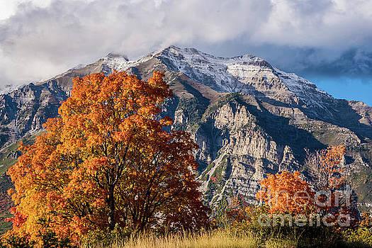 Mt. Timpanogos Autumn - Squaw Peak Road - Wasatch Mountains by Gary Whitton