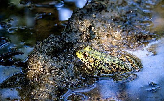 Mud Bath by Carol Hathaway