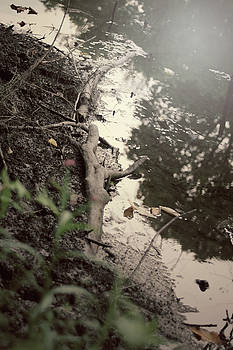 Muddy by Bailey Pedersen