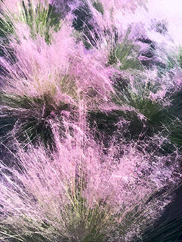 Stan  Magnan - Muhly Grass