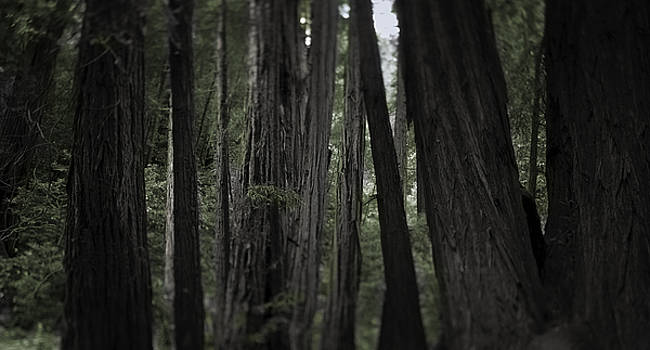 Muir Woods by Mark Wagoner
