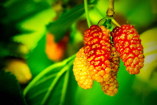 Mulberries - 2 by Barry Jones
