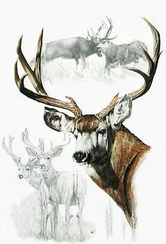 Barbara Keith - Mule Deer