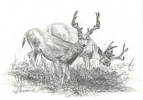 Mule Deer in Velvet by Sarah Bevard