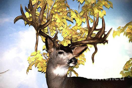 Mule Deer by Ray Shrewsberry