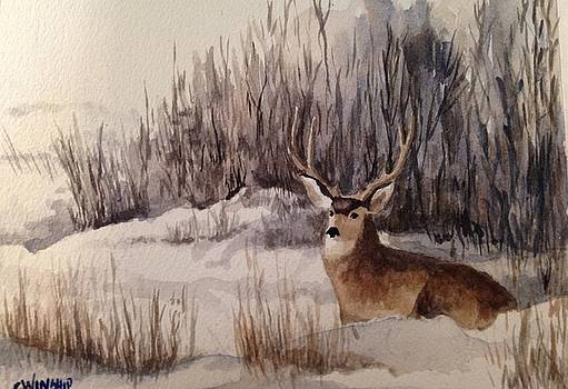 Mulie in Snow by Christine Winship
