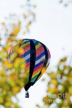 Dan Friend - Multi colored hot air balloon through the trees
