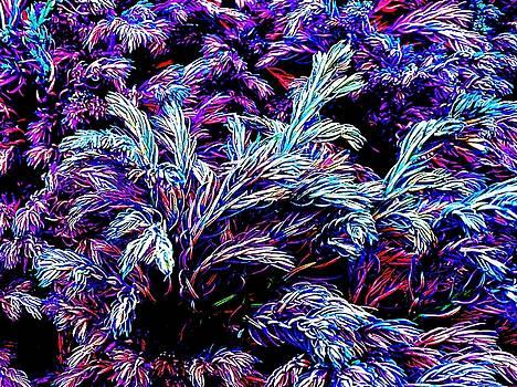 Colin Drysdale - Multi-coloured Conifer