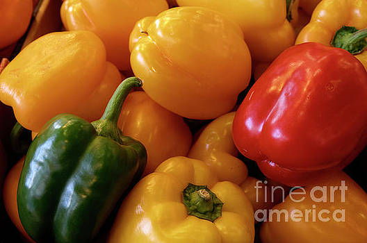 Multicolored peppers by John  Mitchell