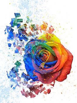 Multicolor Rose Digital Art on White by Barbara Dudzinska