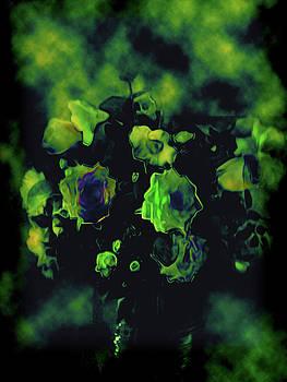 Multidimensional flowers by Morgana Blackcat