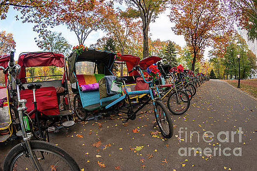 Multiple Colorful Bicycles in a Row in Central Park During Fall  by PorqueNo Studios