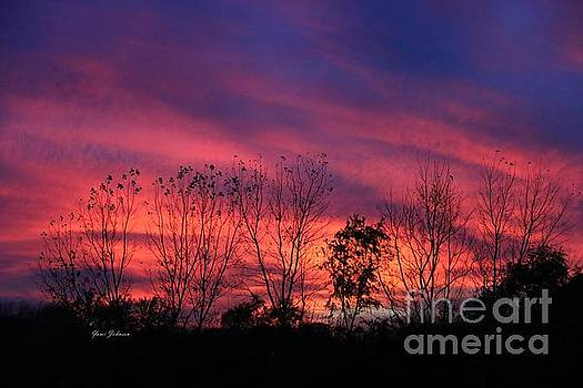 Multiple colors Sunset by Yumi Johnson