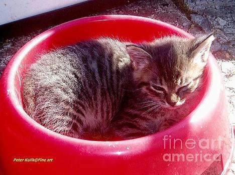 Multiple Kitten by Peter Kulik