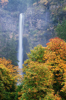 Multnomah Falls descends 611 feet framed by the autumn colors. by Larry Geddis