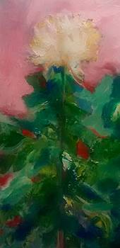 Patricia Taylor - Mum on Pink