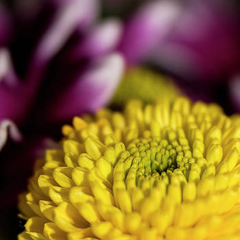 Mums The Word by Jayne Gohr