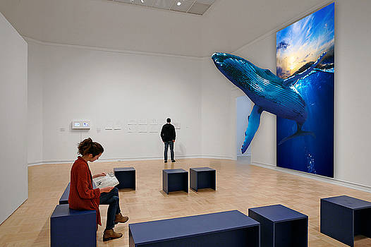 Museum Whale Watching by Marvin Blaine