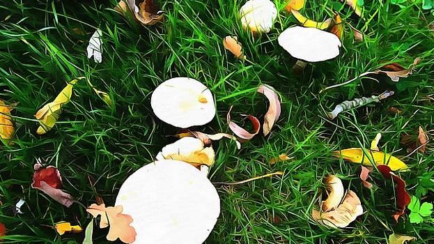 Mushroom grandeur by Marco De Mooy