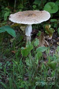 Mushroom by Kerri Mortenson