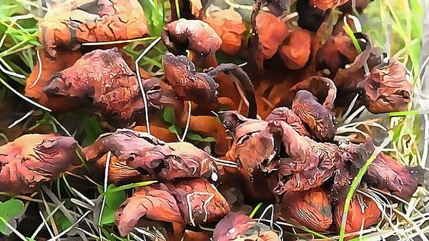 Mushroom massacre by Marco De Mooy