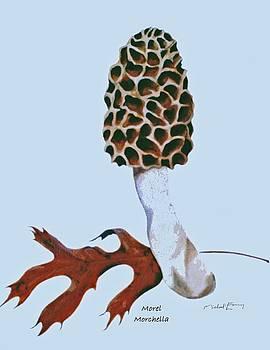 Mushroom - Morel morchella by Michael Earney