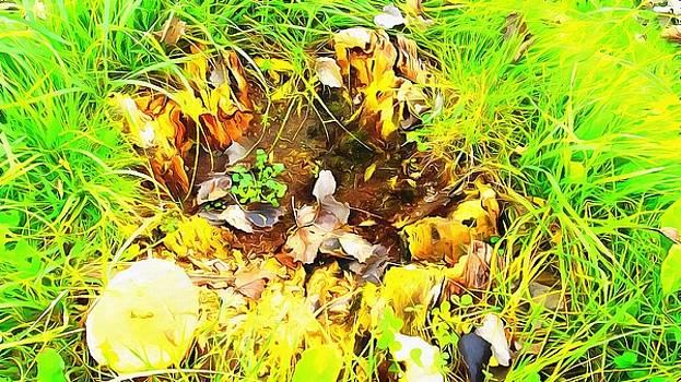 Mushroom nature grandeur  by Marco De Mooy