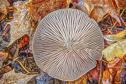 LeeAnn McLaneGoetz McLaneGoetzStudioLLCcom - Mushroom on fall floor
