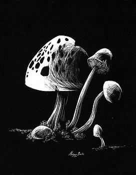 Mushroom patch by Morgan Banks