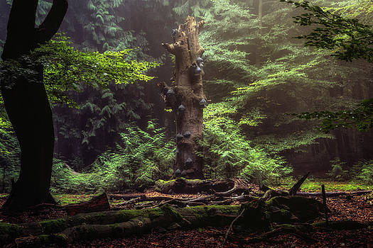 Mushroom tree by Tim Abeln