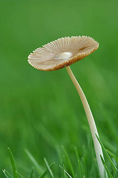 Yuri Peress - Mushroom