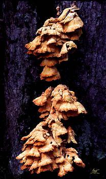 Sam Davis Johnson - Mushrooms 6