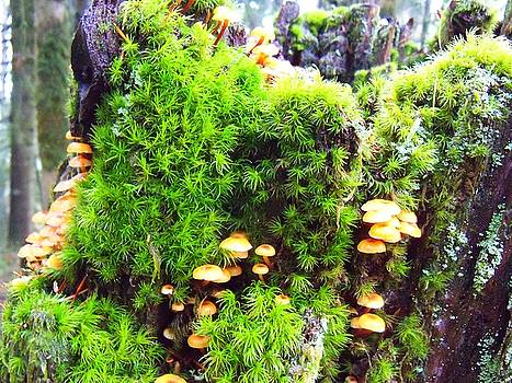 Mushrooms and moss by Steve Battle
