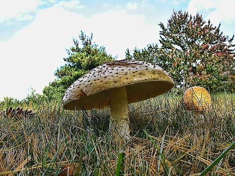 Edward Sobuta - Mushrooms