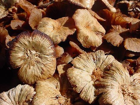 Mushrooms I by Lara Gill