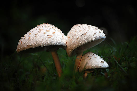 Mushrooms in the morning by Robert Meanor