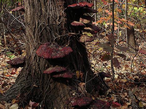 Mushrooms by Kathy Bradley