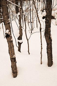 Kathi Shotwell - Muskoka Winter 3