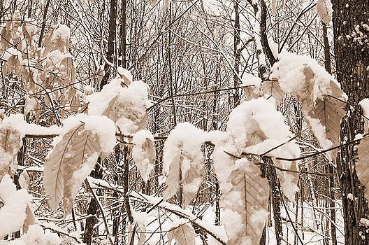 Kathi Shotwell - Muskoka Winter 6