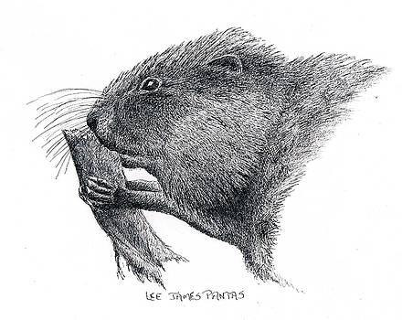 Lee Pantas - Muskrat