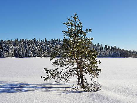 Musta-Solajnen by Jouko Lehto