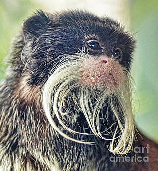 Mustache Monkey Watching His Friends at Play by Jim Fitzpatrick